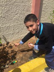 Qasim planting lemon seeds